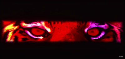 Narrow shot of a tiger's red eyes